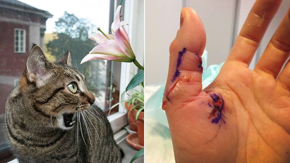 katt sår i munnen