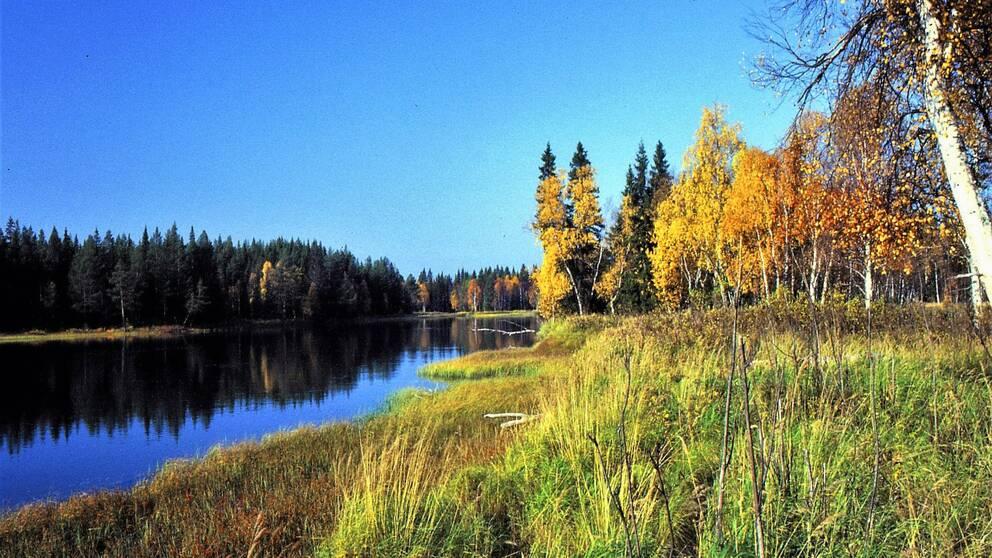 vy över träd med höstfärger längs vattendrag i sol