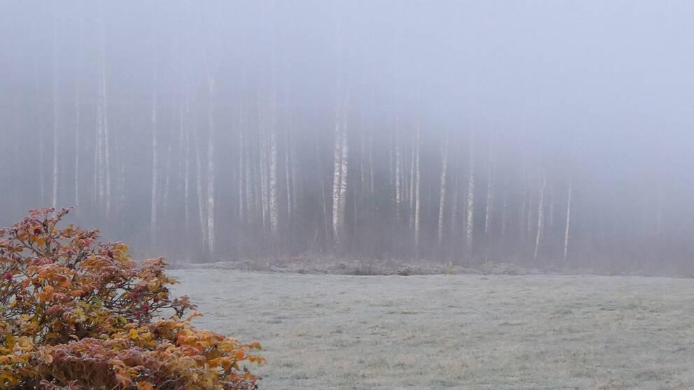 Morgonfrost och dimma i Spelnäs, Värmland den 28 oktober.