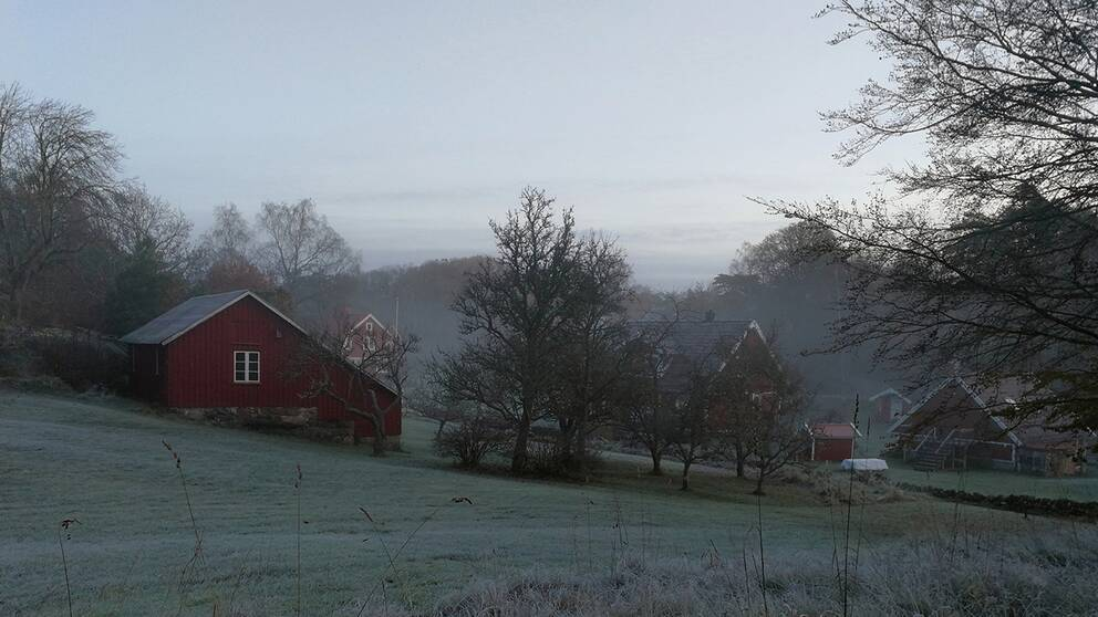 Krispig morgon på Stora Askerön i Bohuslän.