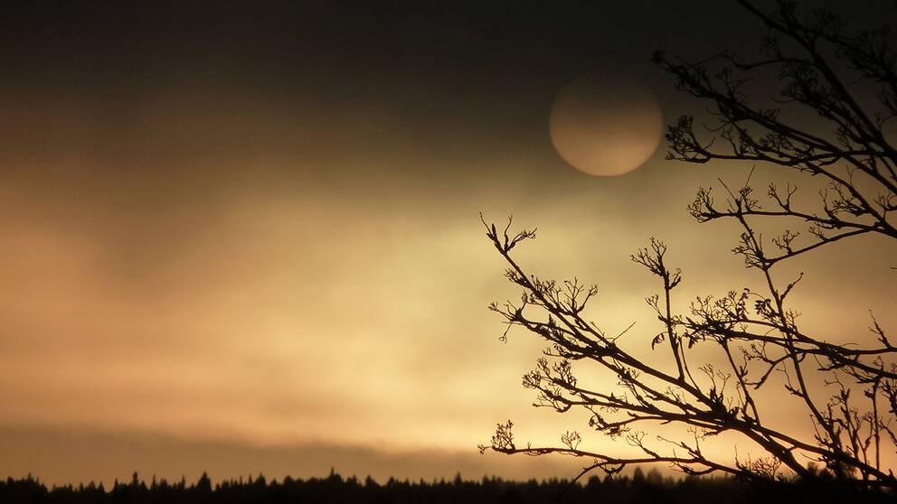 Solen på väg upp men bryter inte igenom ännu. Kl 08.30 Nälden Jämtland, – 8 grader.