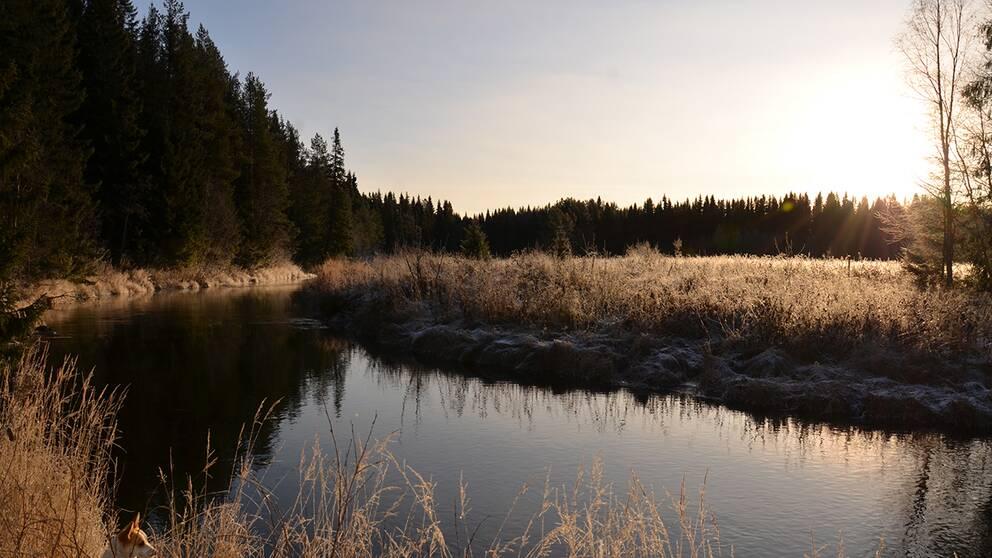 Måndag 4/11En solig förmiddag i Gåxsjö Jämtland med tolv minusgrader.