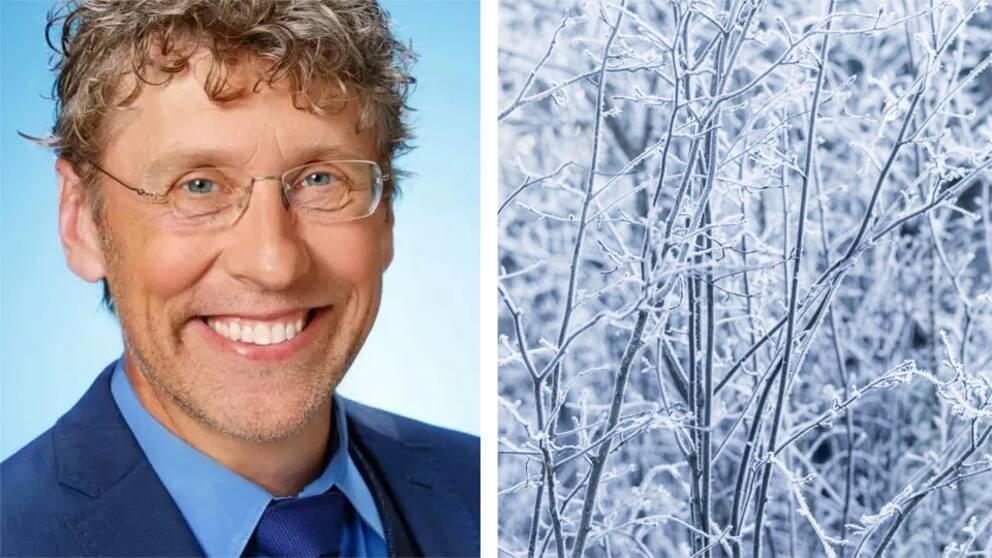T.v: Pererik Åberg SVT:s meteorolog porträtt. T.h: Träd med frost
