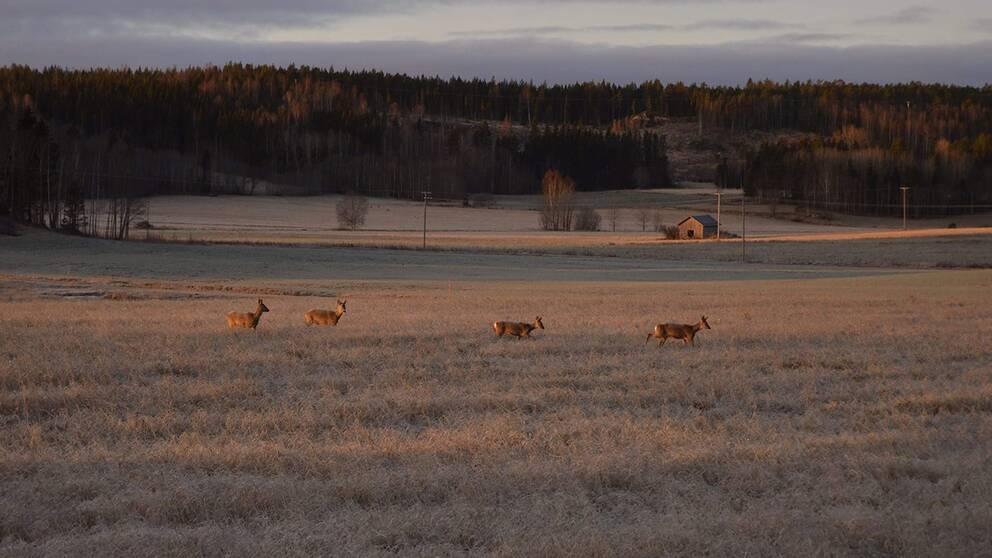Bergsjö, Hälsingland. 6/11-19.