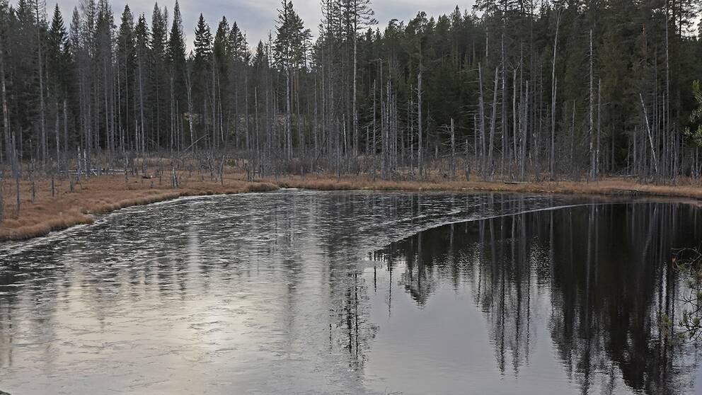 Även här i Bergslagen håller isen på att lägga sig.