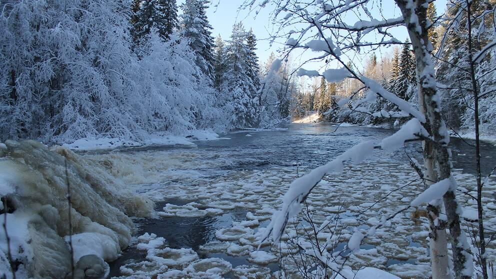 Kågeälven tisdag 5 november. Solig och kall tisdagsmorgon vid Kågeälven Västerbotten.