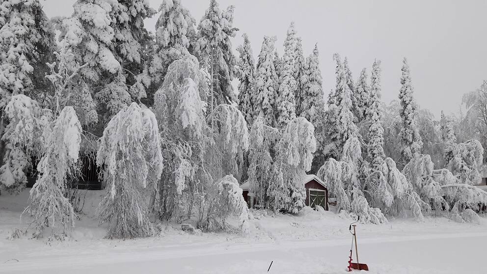 Merasjärvi Lappland den Fredag 22 november.
