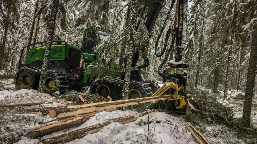 Skogsgare ska ersttas fr att spara fjllnra skog - P4