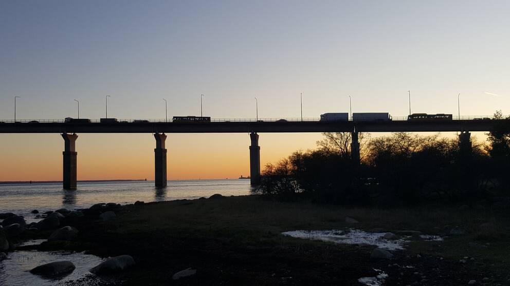 Köer på Ölandsbron, vinter