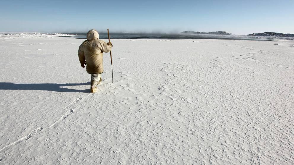 I den arktiska regionen i norra Kanada har studier visat att isarna smälter i snabbare takt än i andra delar av världen.
