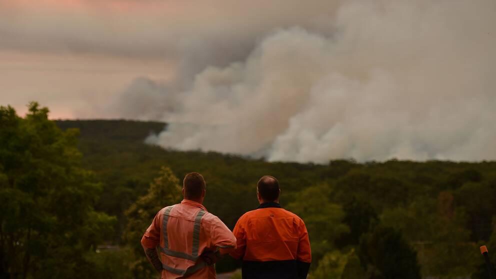 Två brandmän i Australien står på en höjd och blickar över en stor skogsbrand.