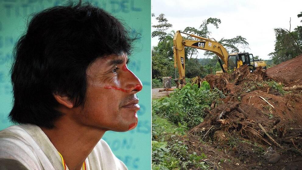 Miljöaktivisten Edwin Chota dödades när han försökte skydda skog i Amazonas mot avverkning. Illegal avverkning av skog till förmån för utvinning av guld har blivit ett allt vanligare problem i Peru.