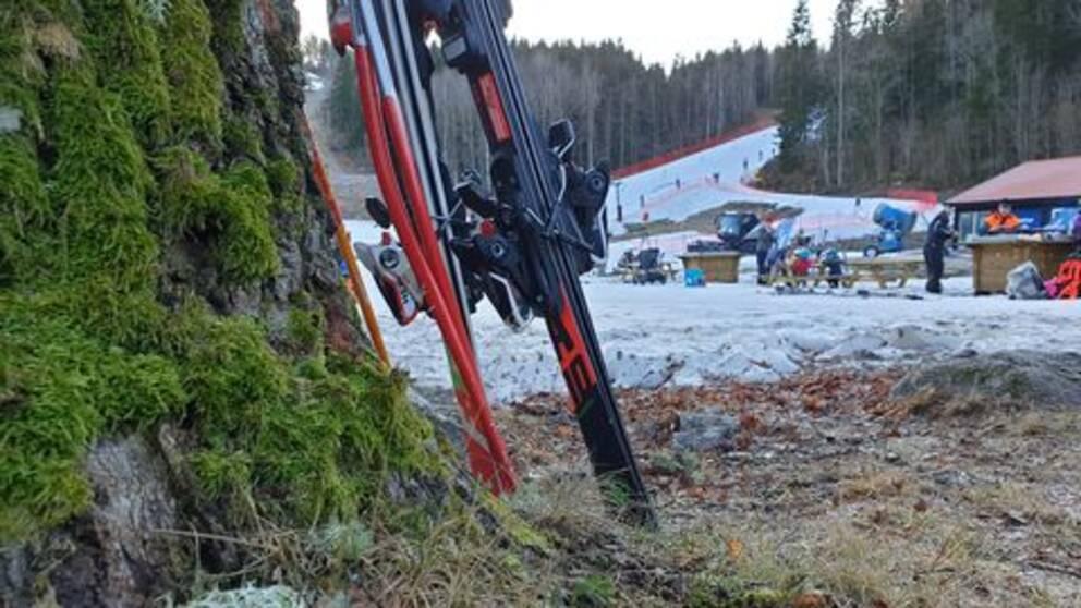 Två slalomskidor står lutade mot ett träd, med gräs under. I bakgrunden syns snöklädda slalombackar.
