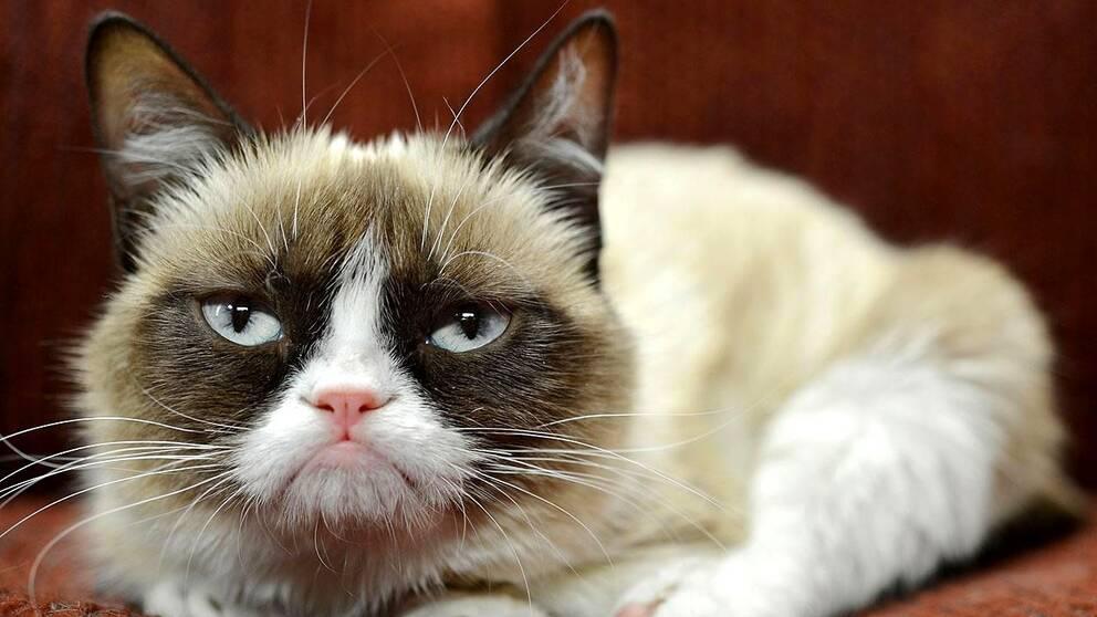 """Grumpy Cat"""
