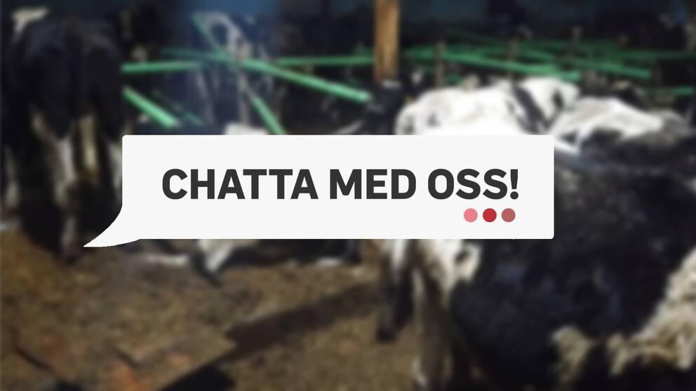 Arla har mottagit starka reaktioner från allmänheten efter SVT:s avslöjande om mjölkgården i Hälsingland.
