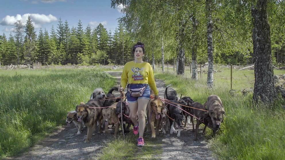 Alexandra Ortega har 30 egna hundar. Bild på när hon är ute och går med hundarna.