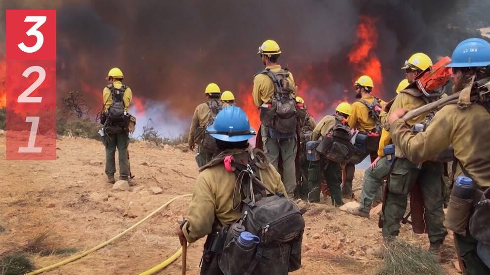 En grupp brandmän i Kalifornien som tittar på en grässlänt som brinner.
