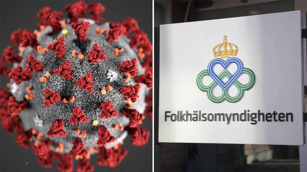 En närbild på viruset och en bild på en skylt till Folkhälsomyndigheten