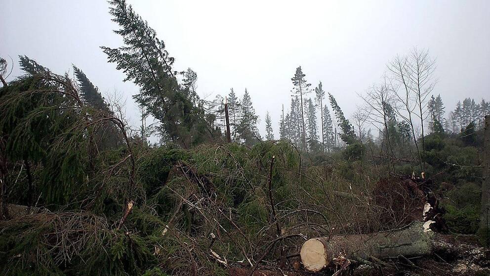 Det har gått tio år sedan stormen Gudrun drog fram.