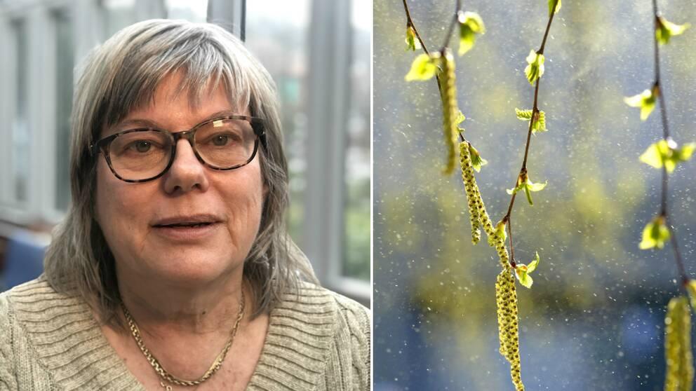 Åslög Dahl, forskare på Göteborgs universitet, och en bild på pollen