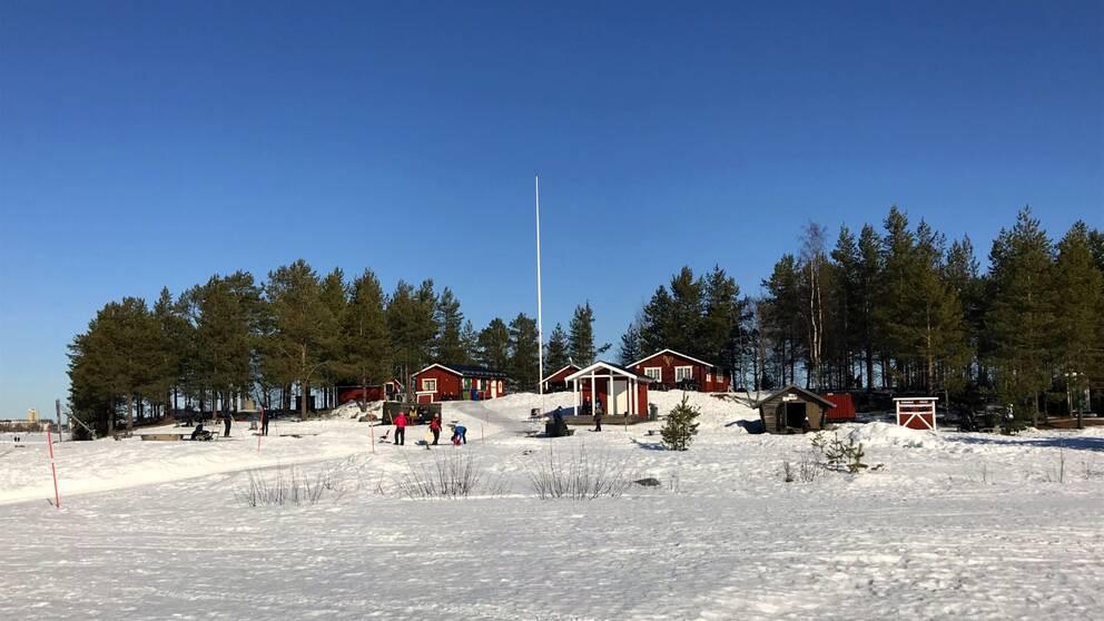 Gråsjälören i Luleå vintertid