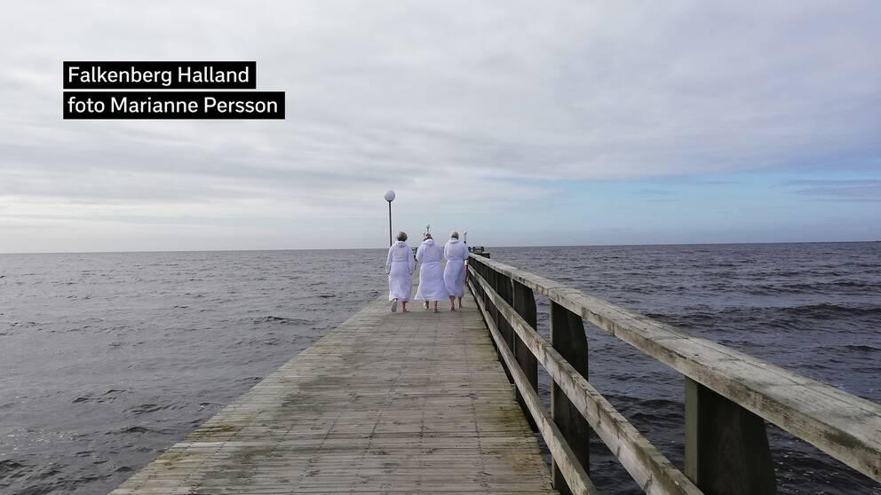 Tre tuffingar på väg att doppa sig vid Skrea strand i Falkenberg i Halland. Förmiddag 16 mars.