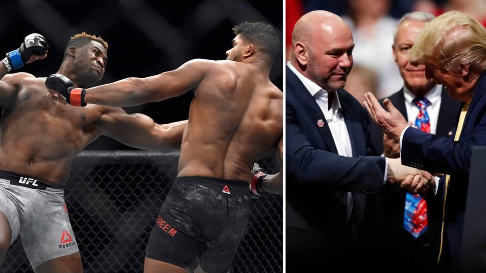 Vänster: Tungviktarna Francis Ngannou och Alistair Overeem har båda fått matcher inställda. Höger: UFC:s Dana White har nära band till president Donald Trump.