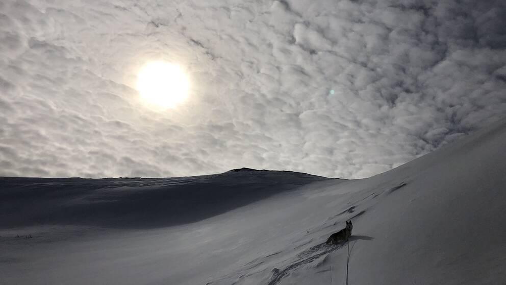 Norra sidan av Åreskutan Jämtland vid lunchtid söndag (5 april).Hunden på bilden är vår siberian husky Zelda som älskar fjäll och snö.