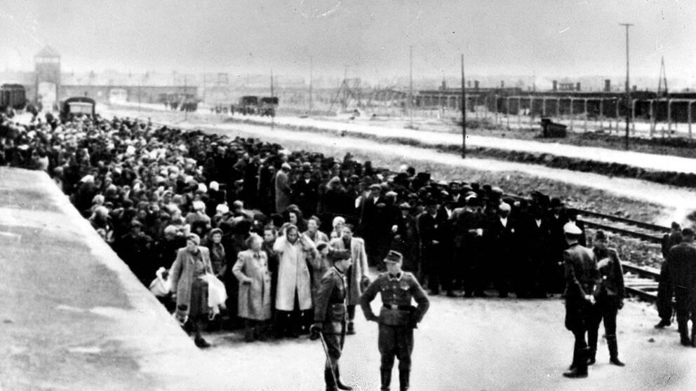 Tätt packade står hundratals fångar och väntar på att föras in till koncentrationslägret Auschwitz.