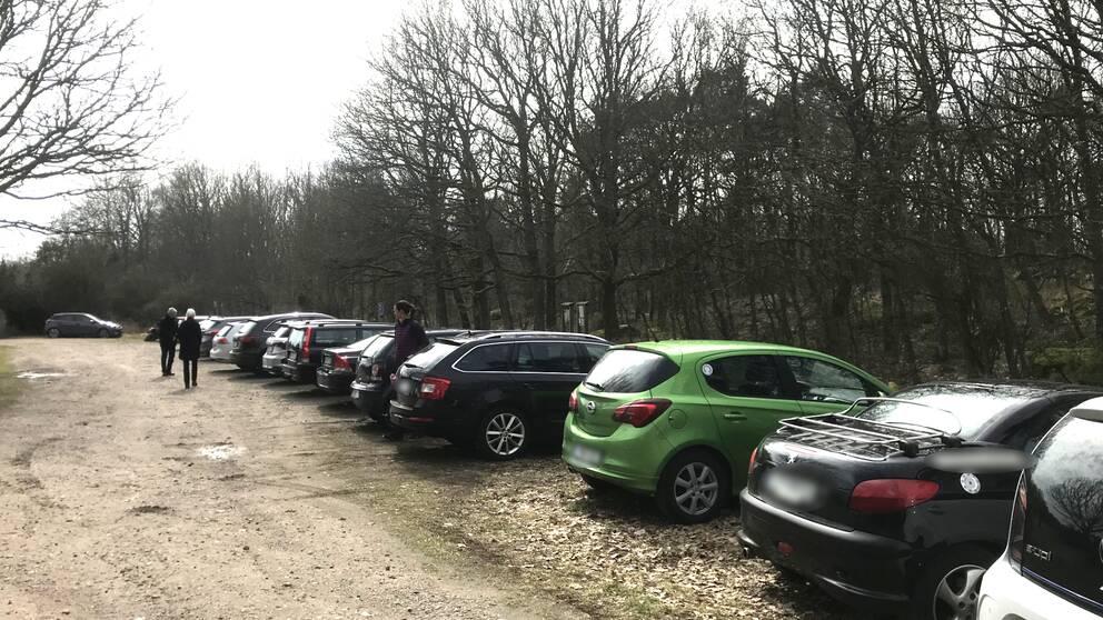 Fullt på parkeringen till Skipås naturreservat på gränsen mellan Halmstad och Falkenberg.