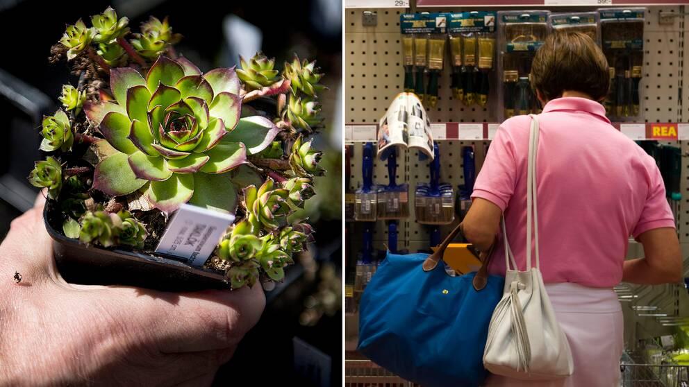 En blomma från en handelsträdgård bredvid en kund som köper penslar i ett byggvaruhus.