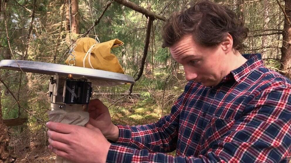 Följ med bekämpningstekniker Hugo Widmark ut i skogen för att räkna myggor.