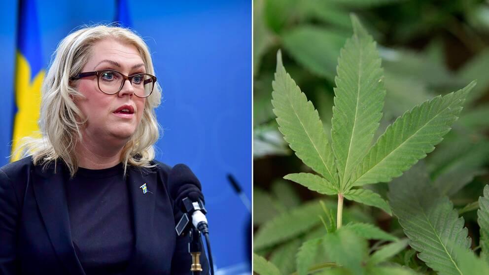 Det är förbjudet att använda droger i Sverige och stora resurser läggs på att jaga narkotikaanvändarna. Nu går Folkhälsomyndigheten emot regeringen och vill utreda förbudet. Montage med arkivbilder på Lena Hallengren och en cannabisplanta.