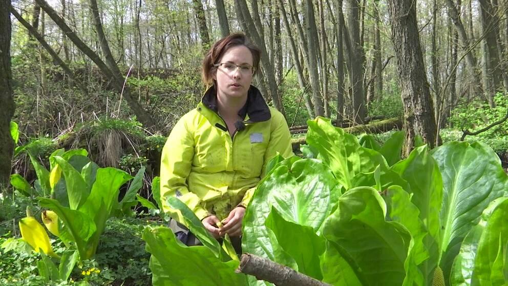 Cajza Eriksson arbetar på Länsstyrelsen i Skåne och är expert på invasiva arter.