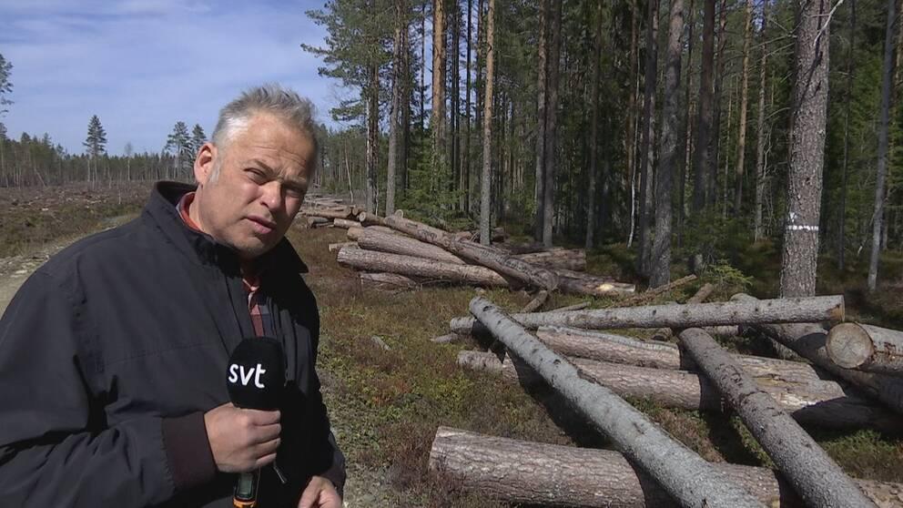 Reporter Berno Jonsson på plats vid Bäcksjön i Umeå kommun. Står framför det avverkade timret som nu tagits tillbaka till Bäcksjön.