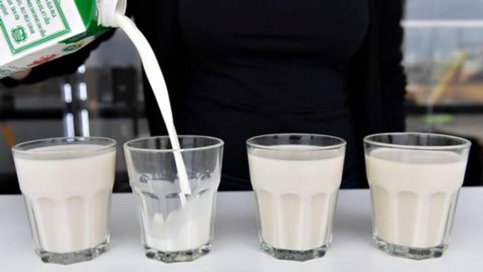Fyra mjölkglas varav ett fylls på från ett mjölkpaket.