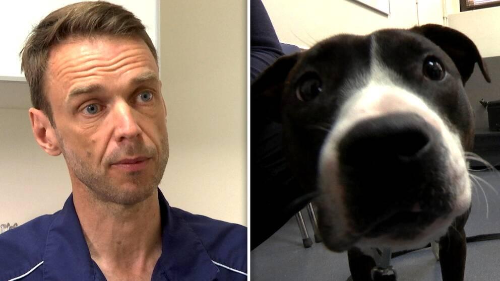 Gustav Svensson, veterinär, hund