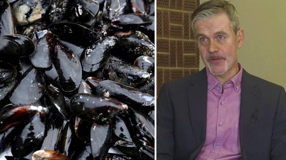 Kontrollanterna om bristerna vid musselodlingen