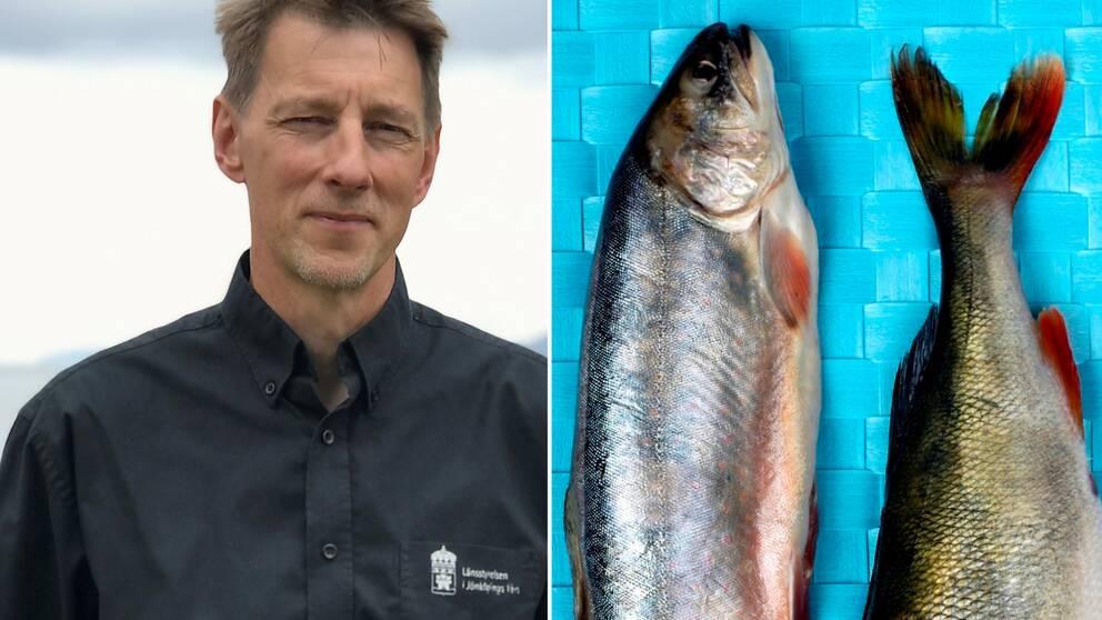 Tvådelad bild. Vänster: Porträtt på Anton Halldén, chef för Länsstyrelsens fiskeenhet, framför Vättern. Höger: Två döda, färska rödingar ligger på en flätad duk.
