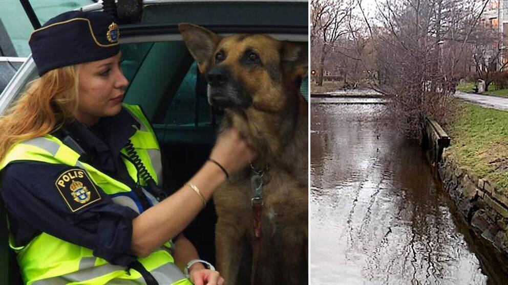 Misshandlad hund raddades av polisen