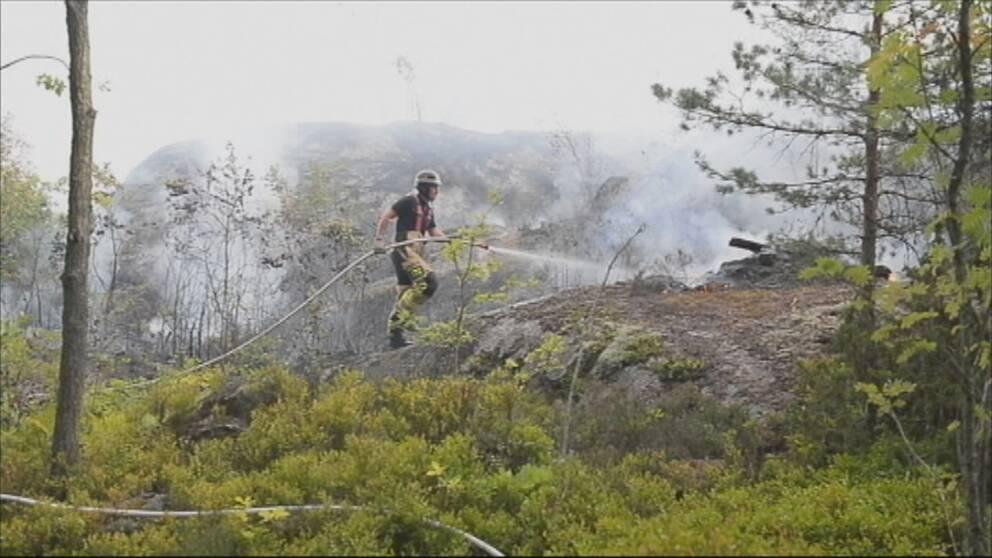 brandman som försöker släcka skogsbrand.