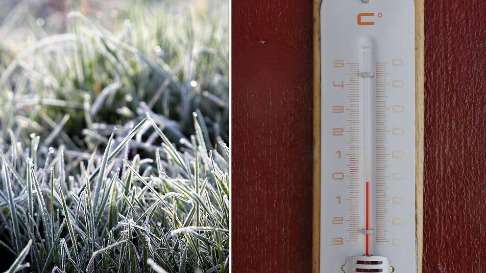 Temperaturen kröp ner till minus 3,3 grader natten till fredagen i Latnivaara.
