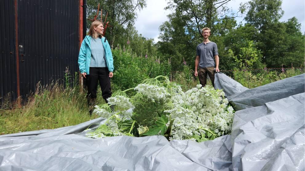 Länsstyrelsen rensar ut jätteloka, norr om Karlshamn