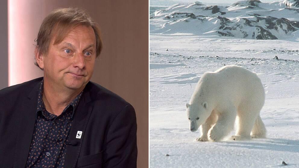 Tom Arnbom, expert från Världsnaturfonden WWF, berättar om isbjörnarnas tuffa framtid.