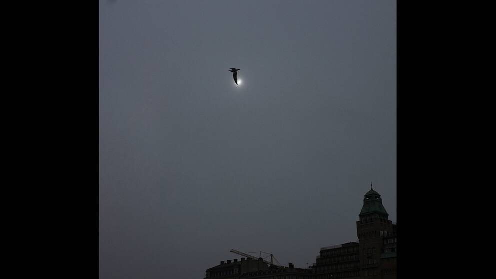 Solformorkelse kan bli svar att se