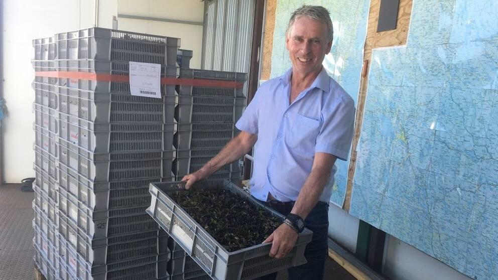 Ulf Hagner visar upp inköpta blåbär på företaget i Stöde.