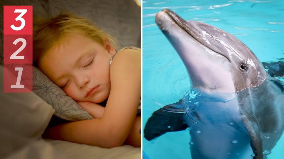 En bild på ett sovande barn och en bild på en delfin