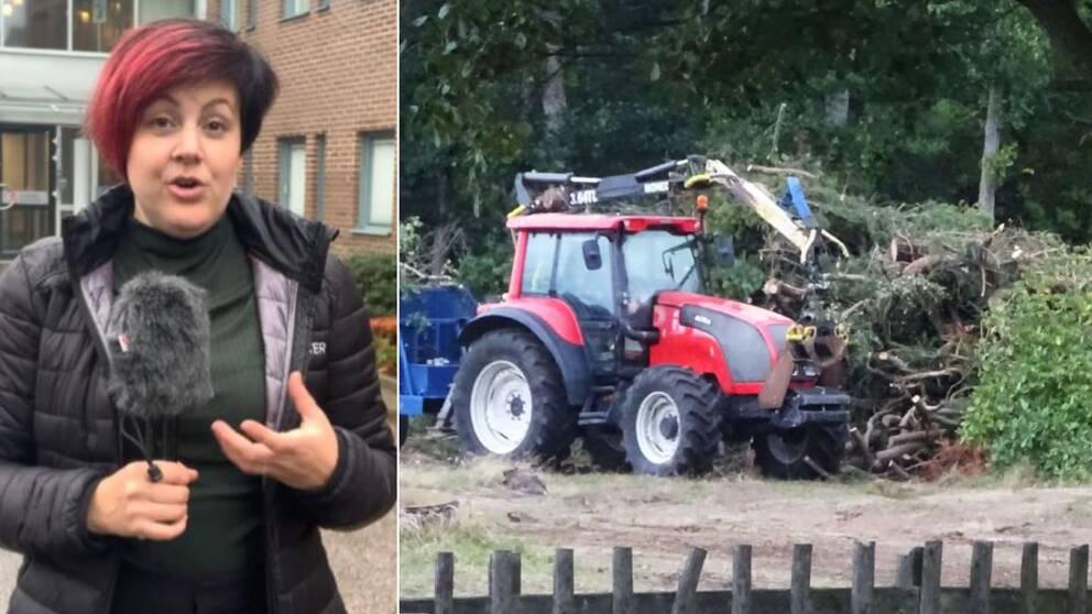 Kvinna till vänsterstår med mick och pratar, till höger en traktor som kör iväg med träd.