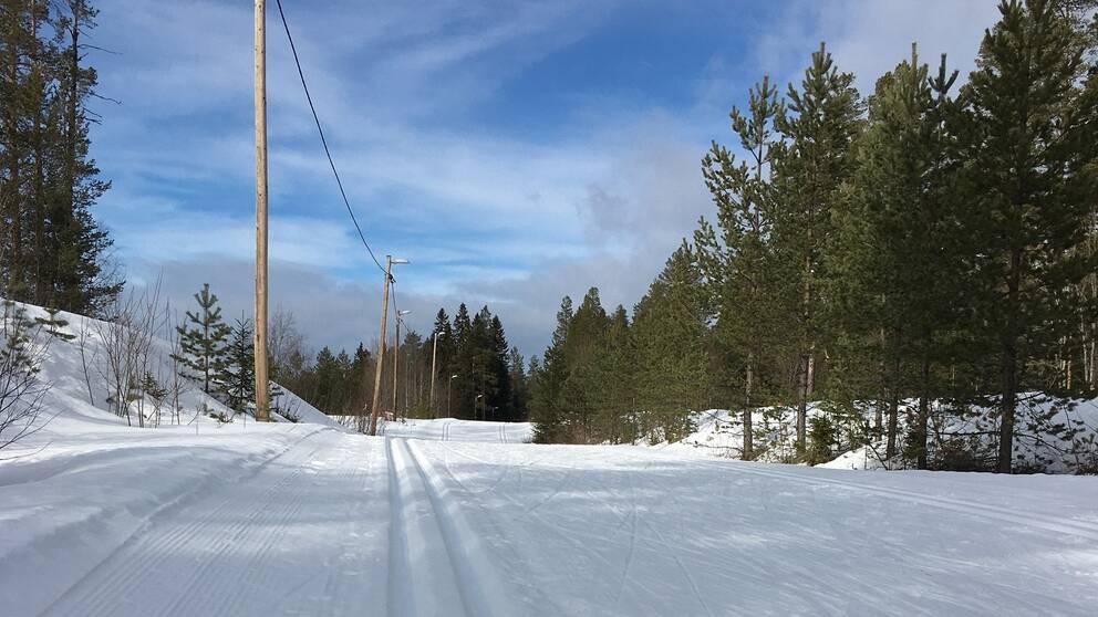Bild på skidspår genom en skog. Blå himmel med lite moln i bakgrunden.