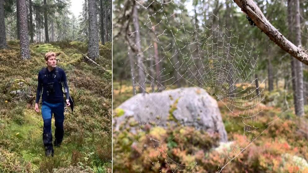 I klippet berättar inventerare Jan Rees varför han tycker att man ska ge sig ut i en kontinuitetsskog och vandra.